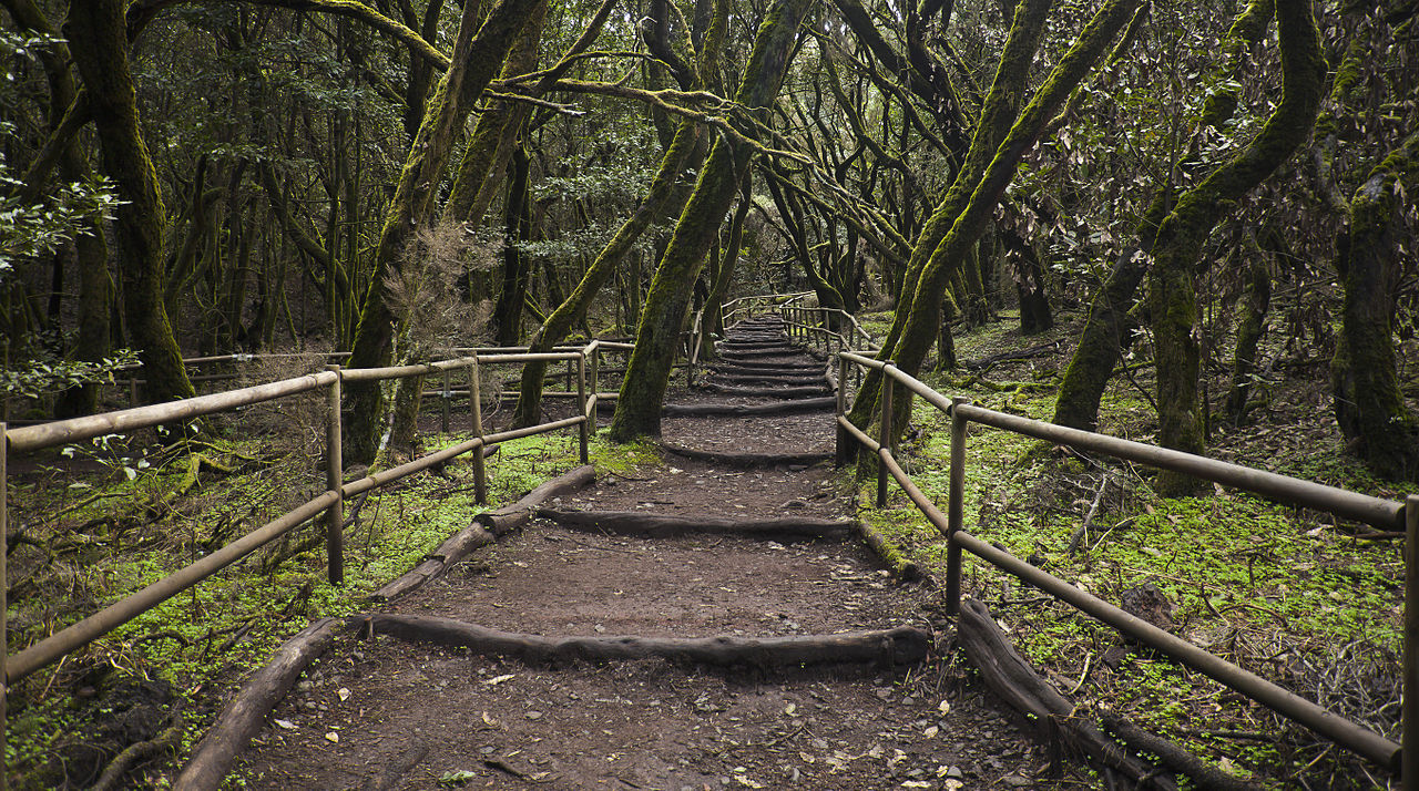 Enchanted Forest, Garajonay National Park, La Gomera, Spain.