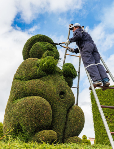 Topiary gardener (or artist?) working a cypress in the cemetery of Tulcán, north of Ecuador.