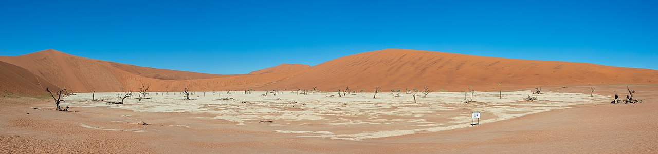 Panoramic view of Deadvlei with its dead camel thorns (Vachellia erioloba), Namib-Naukluft Park, Namibia.
