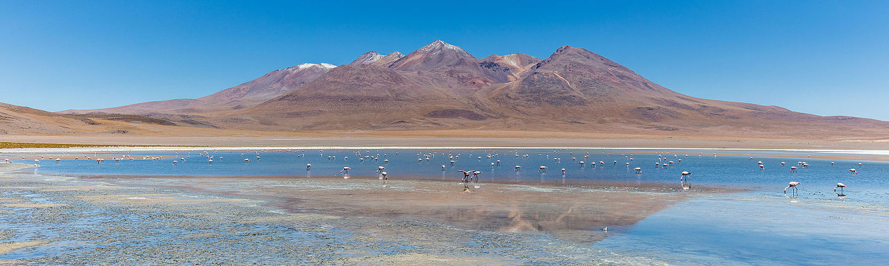 Andean flamingos (Phoenicoparrus andinus) in Cañapa lake, Bolivia.