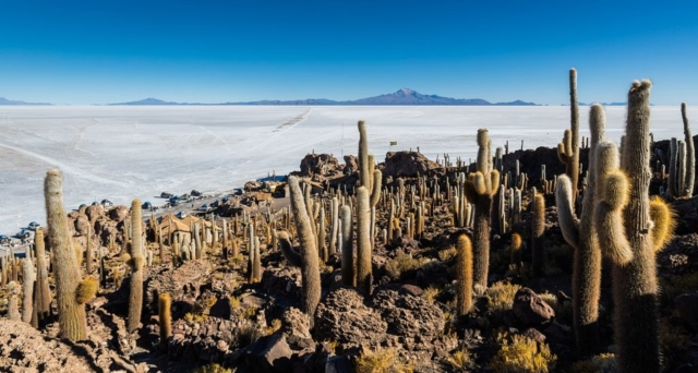 Salar de Uyuni, the surrounding mountains and giant cactuses (Echinopsis atacamensis) in Incahuasi island, southwest Bolivia.