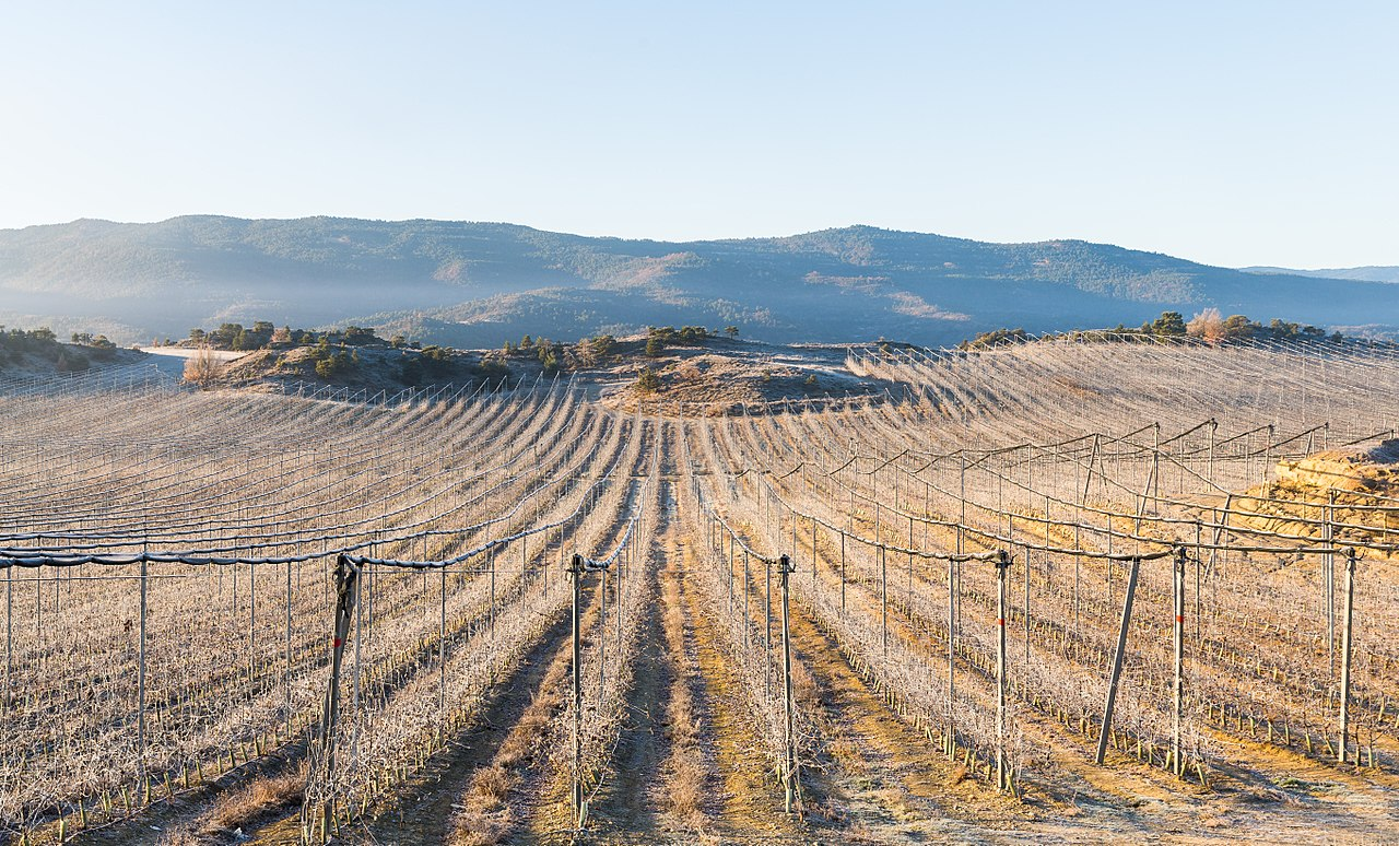 Landscape of frozen vineyards near Castillo de Lerés, province of Huesca, Spain.