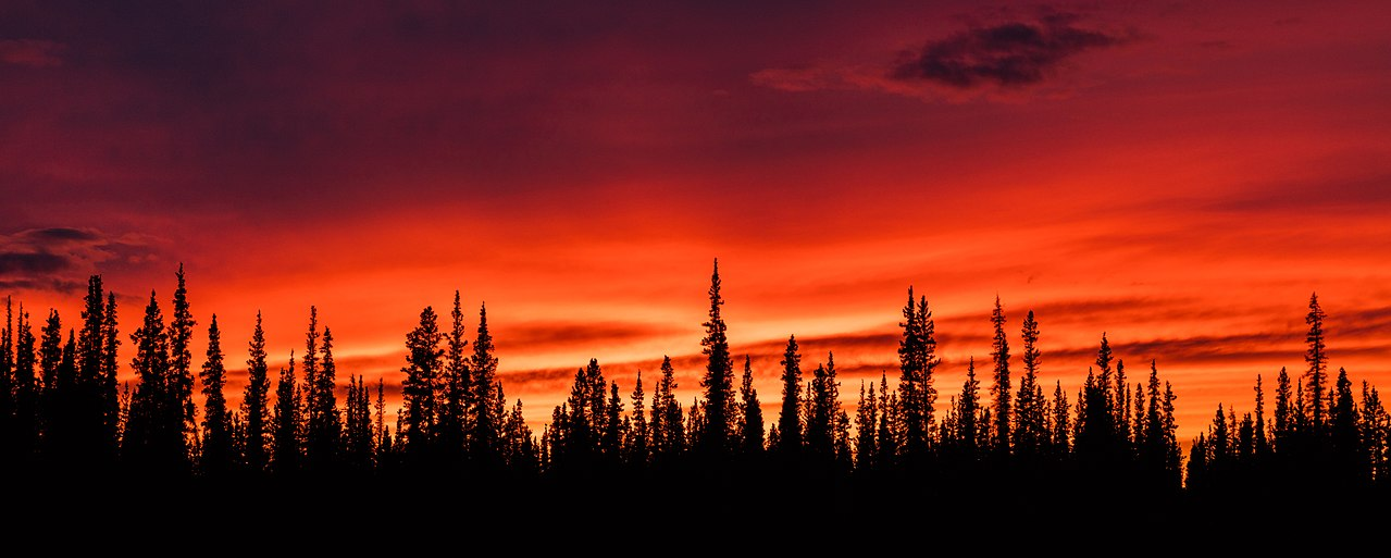 Sunset in the woods in Tok, Alaska, United States.